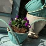 bepflanztes Geschirr