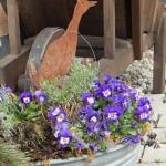 Frühling! in Wannen...