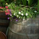 Fässer als Regentonnen od.zum Bepflanzen