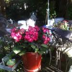 pflanzen (4)