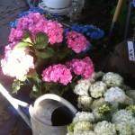 pflanzen (8)