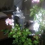 Pflanzen und passende Deko