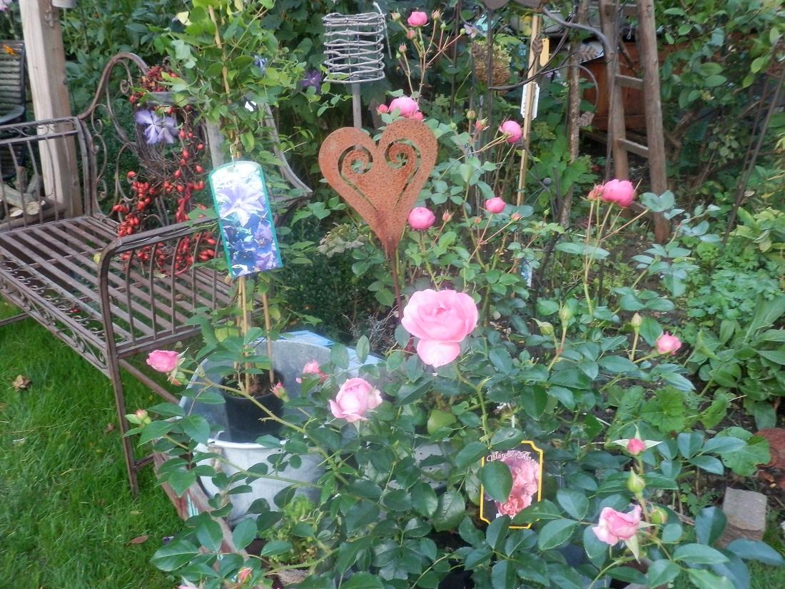 knospige bl hende rosen f r den herbstlichen garten pflanzen art. Black Bedroom Furniture Sets. Home Design Ideas