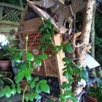 Vogel und Insektenhotels