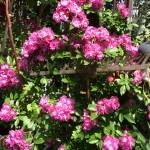 Perennial plush