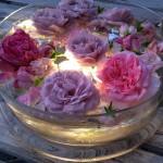 lila und rosé