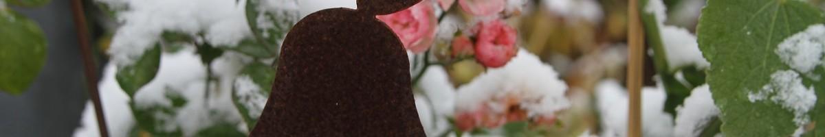 blüht lange: Pomponella