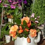 Westerland in orange