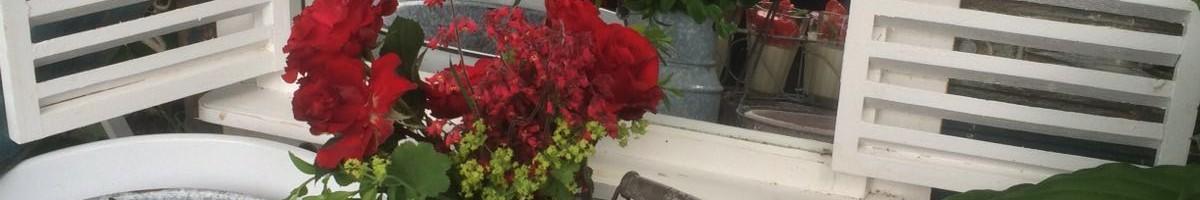 rosenpannacotta