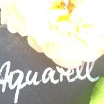 Aquarell, gelb mehrfarbig