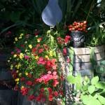 von den ersten Balkonpflanzen halten sich etliche noch tapfer