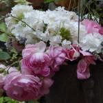 Blüten der Jasmina, bis zum Frost