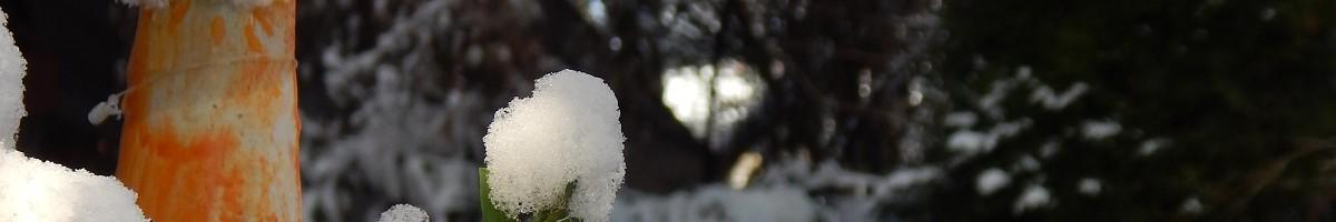 Sommer und Winter