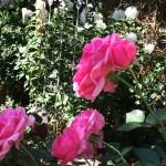 live im Pflanzenartgarten