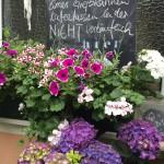 Balkonpflanzen, immer wieder neu