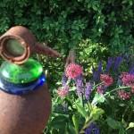 Rostvögel im Garten