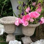 engl Rose  Gertrude Jakyll