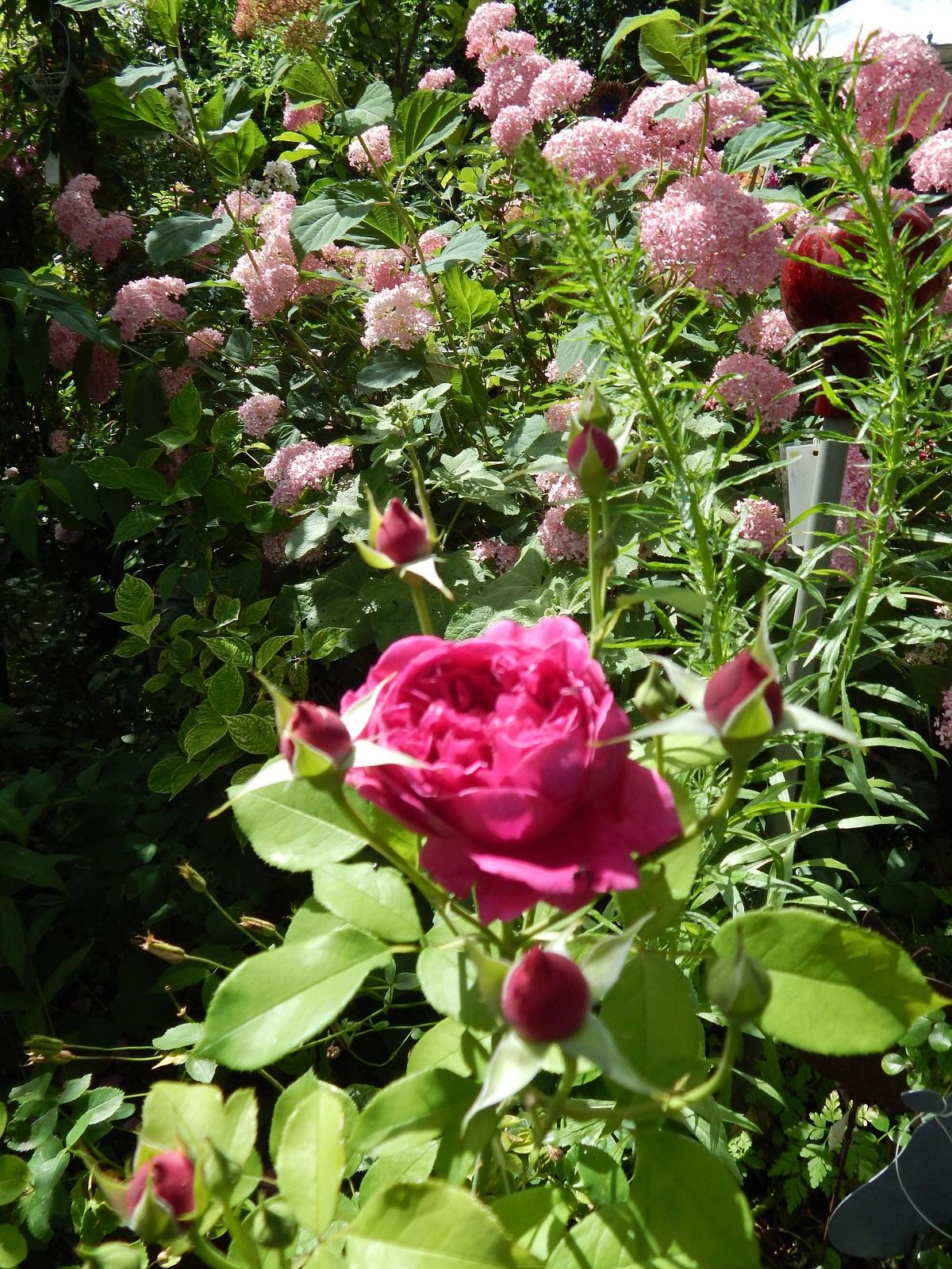 Shakespeare vor Rosa Annabell
