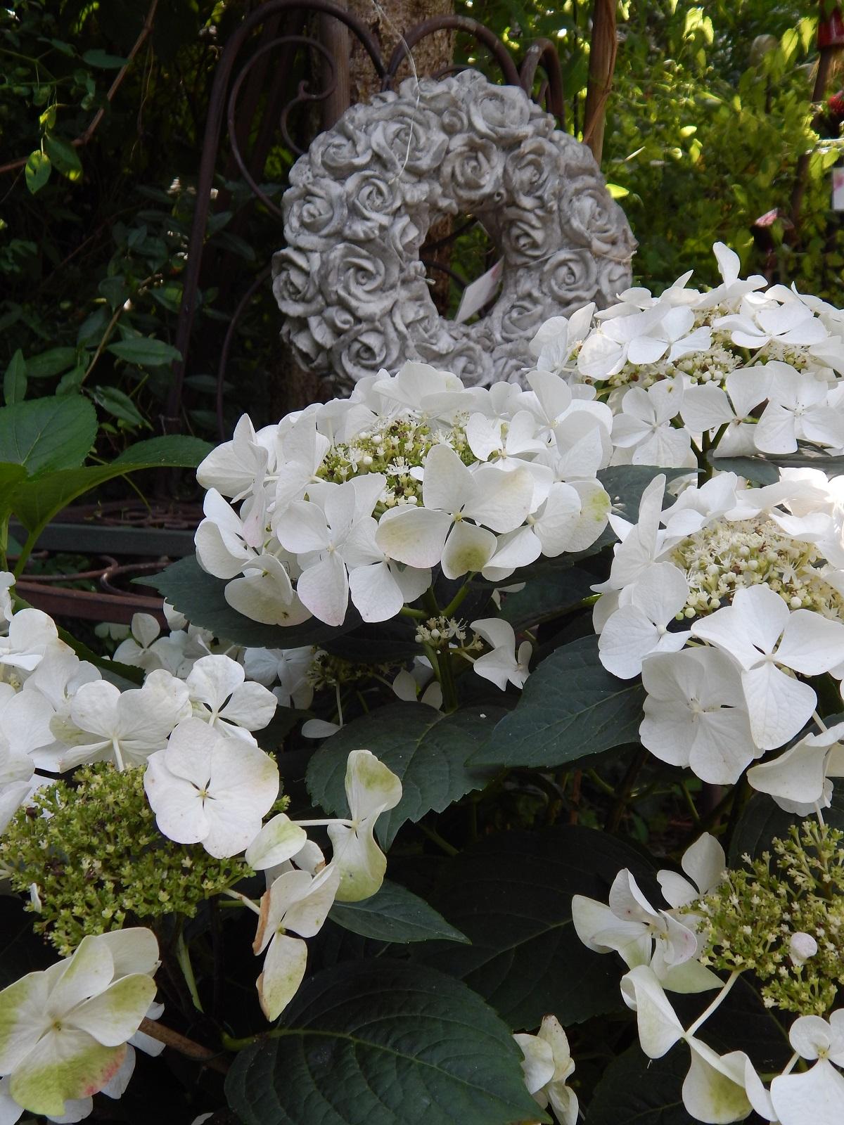 Rundgang durch einen laden pflanzen art for Pflanzen laden berlin